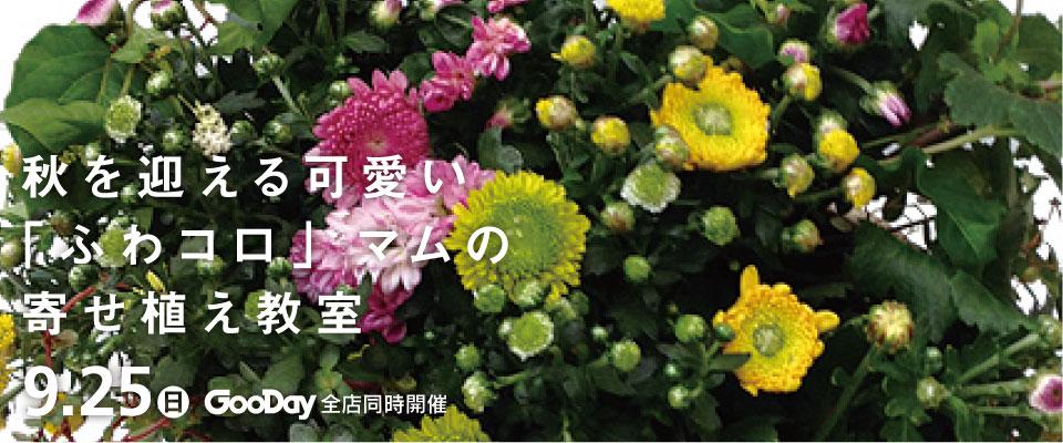 全店寄せ植え教室【秋を迎える可愛い寄せ植え】